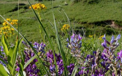 Conservation Tips: In the Garden
